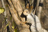 Squirrel 3 — Stock Photo