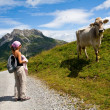 Girl and cow in Alps — Stock Photo