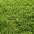 Green lawn — Stock Photo #1067356