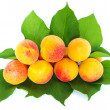 Leafs and apricots — Stock Photo