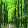 Green forest — Stock Photo #1067995