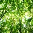 Green forest — Stock Photo #1068007