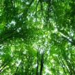 Green forest — Stock Photo #1068023