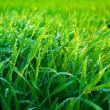 Grass — Stock Photo #1068053