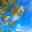 Tree on  sky — Stock Photo