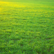 Green lawn — Stock fotografie #1068920