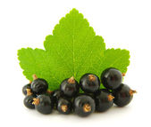 Black currant — Stock Photo