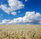 Grain — Stock Photo