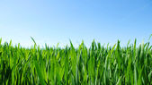 Beautiful green lawn — Stock Photo
