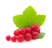 Red currants on white — Stock Photo