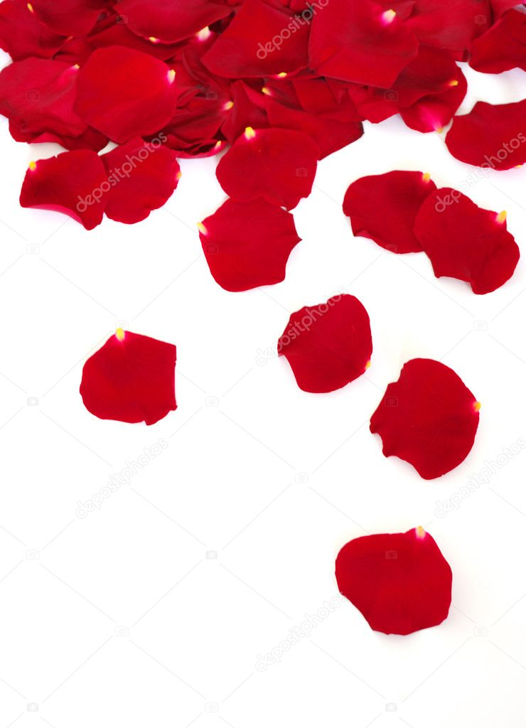 Petals of a rose, on a white background. — Stock Photo #1067667