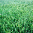 Background green lawn — 图库照片