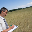 Man inspecting the wheat — Stock Photo