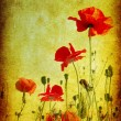Grunge poppies background — Stok Fotoğraf #1055359