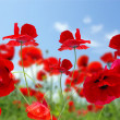 Poppy red — Stockfoto #1059528