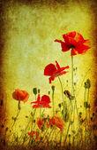 Grunge poppies arka plan — Stok fotoğraf