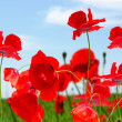 Poppy red — Stockfoto #1068833
