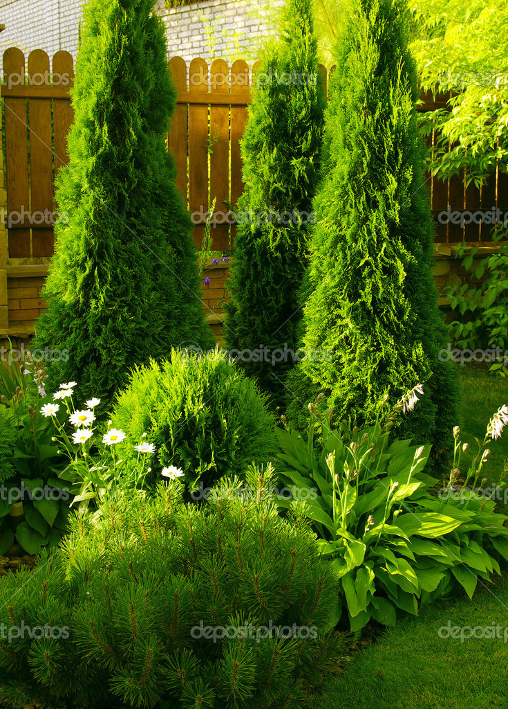 A wall Garden with cipress and bushes   Stock Photo #1068446