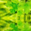 Green leaf - Foto de Stock