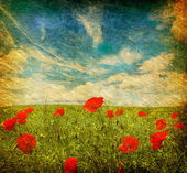 Grunge poppies background — Foto Stock