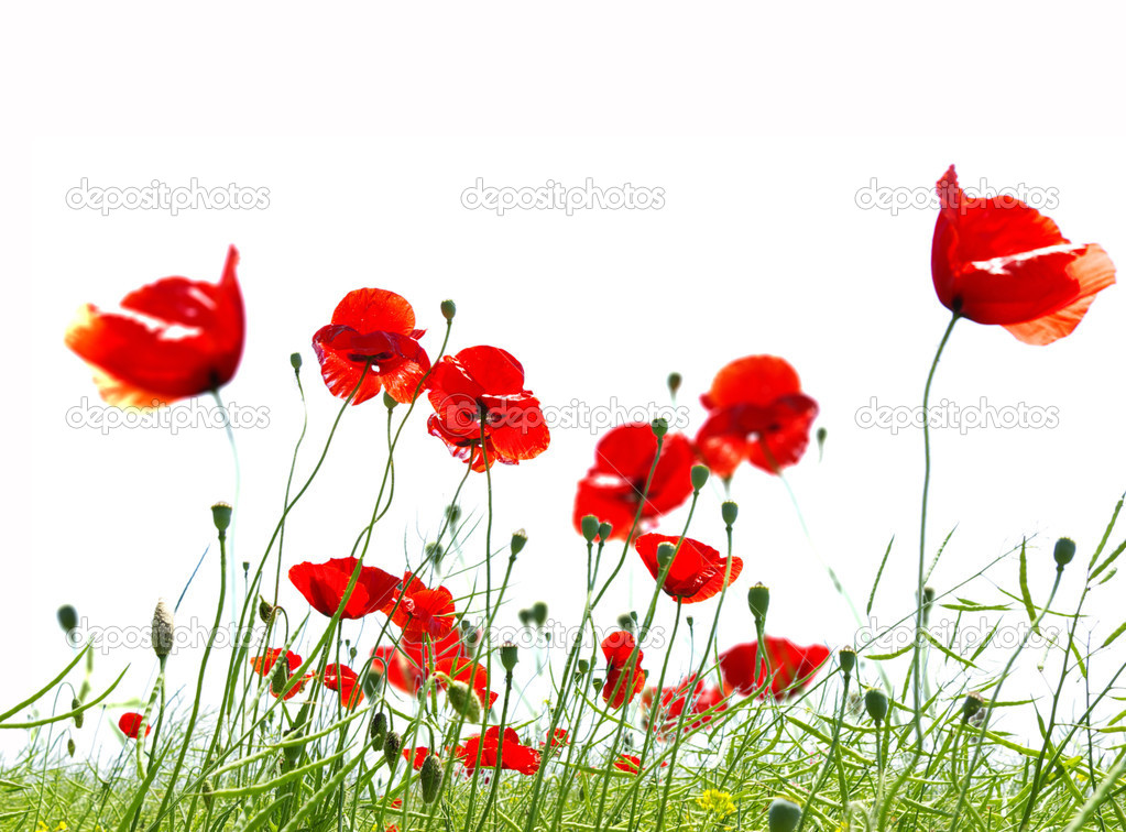 Poppy flower in the sky — Stock Photo #1077153