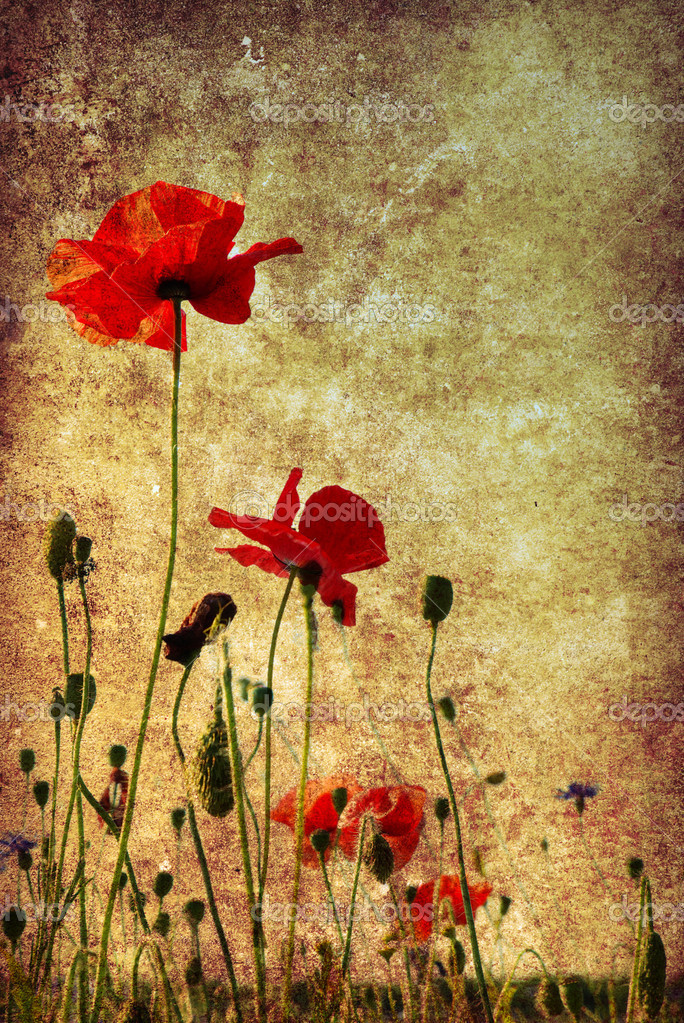 Photo of a poppies pasted on a grunge background — Stock Photo #1079499