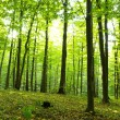 Forest — Stock Photo