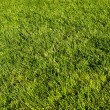 Green lawn — Stock fotografie #1083845