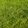 Green lawn — Stock Photo #1083845