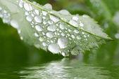 дождевая капля — Стоковое фото