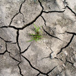 cracked earth — Stock Photo