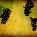 Wine label background — Stock Photo