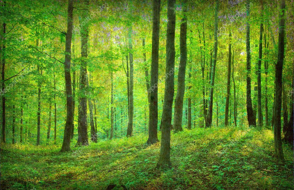 复古森林照片