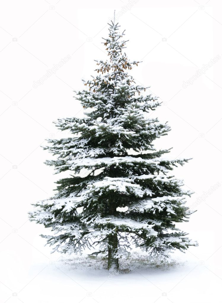 Christmas Tree - Isolated over White background — Stock Photo #1249659