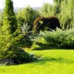 Garden — Stock Photo #1252252