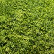 Green lawn — Stock Photo #1252586