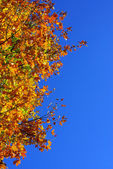 Tree in fall autumn — Stock Photo