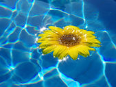 Flower on blue water — Stock Photo
