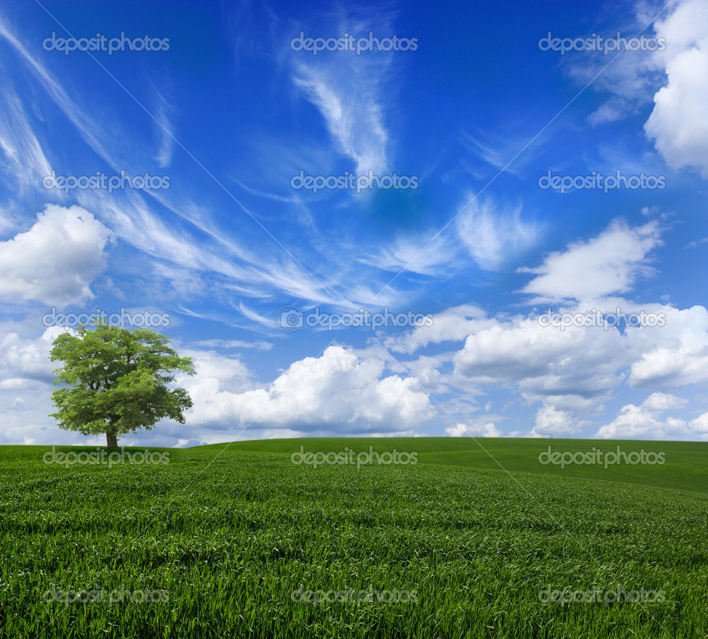 Green meadow under blue sky with clouds  Stock Photo #1252493