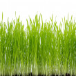Green Grass — Stock Photo #2618952