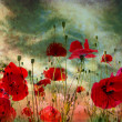 Stockfoto: Poppy flower