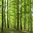 Forest — Stock Photo #2624250