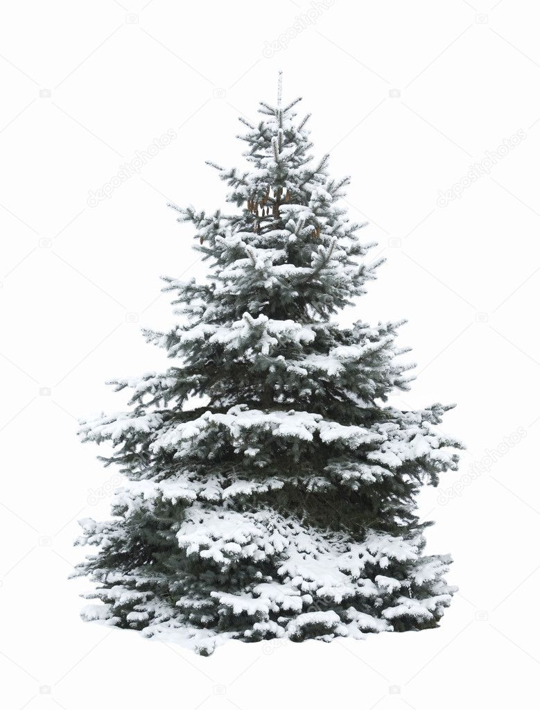 Christmas Tree - Isolated over White background  Stock Photo #2621430
