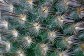 It is a lot of prickles — Stock Photo