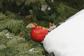 Apple and snow — Stock Photo