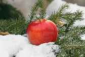 Apple on snow — Stock Photo