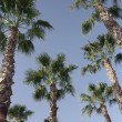 Stock Photo: Palm trees and sky