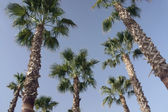 Palm trees and sky — Stock Photo
