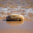 Stock Photo: Coral on beach