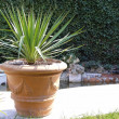 Garden palm — Stock Photo #1158238